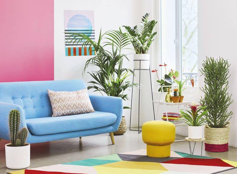 Bien choisir une plante d'intérieur